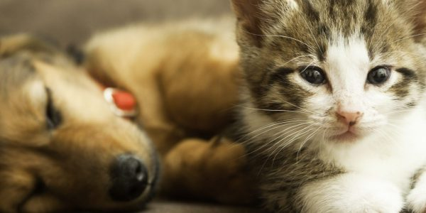 Image of puppy and kitten at PawPurity