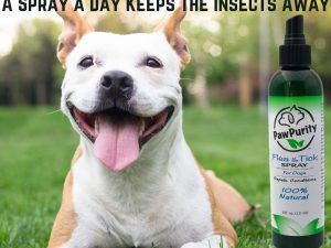 Happy dog showing a once a day spray of PawPurity's Flea & Tick Spray will keep the insects away.