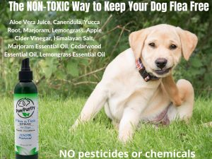 Stop using poisons on your dog when you can use PawPurity Flea & Tick Spray where the natural ingredients are shown in this poster.