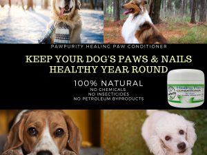 Image showing four dogs informing people to keep their dog's paws and nails healthy year round with PawPurity Healing Paw Conditioner