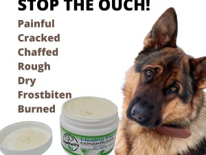 Dog in pain that can be treated for painful, cracked, rough and burned paws.