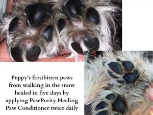 Puppy with frostbitten paws used PawPurity Healing Paw Conditioner for five days and they were completely healed. Image shows before and after.