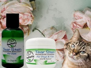 Image of cat and roses. Cat's eyes are clean from using PawPurity Tear Stain Powder