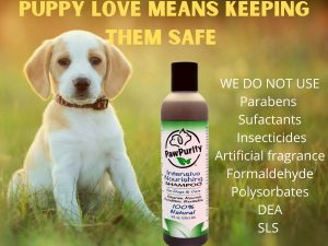 Keep puppies safe by using shampoos with only natural ingredients like PawPurity Intensive Nourishing Shampoo