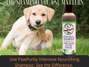 Dog scratching because of shampoo. PawPurity suggests using its all natural Intensive Nourishing Shampoo that does more than clean. It cleans, nourishes, conditions and repels insects.