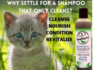 Kittens should not use shampoos that clean only. Their skin needs to be nourished, conditioned and revitalized using PawPurity Intensive Nourishing Shampoo.