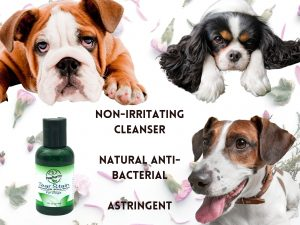 Photo collage of three dogs and PawPurity Tear Stain Remover Kit