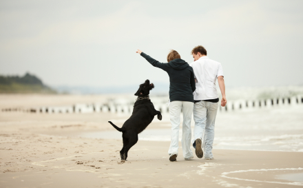 Flea prevention is particularly important in places that are moist and damp. The beach is one example of this.