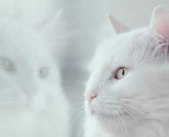 Cat Shampoo Ingredients to Avoid by PawPurity